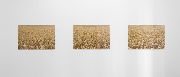 Pierre Joseph, Photographies sans fin : champ de blé 1, 2016. Lamba prints, more or less 9 pictures, 80 × 120 cm. Courtesy galerie Air de Paris Produced by La Galerie, Noisy-le-Sec. Photo : Pierre Antoine.